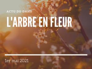 Read more about the article Actu du Dahu – L'arbre en fleur