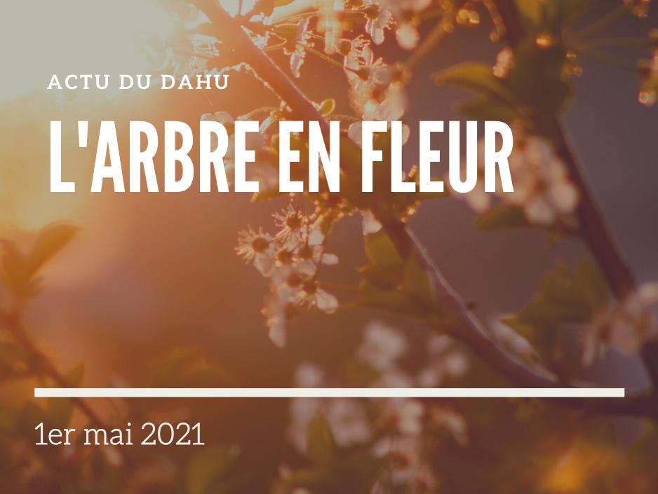 You are currently viewing Actu du Dahu – L'arbre en fleur